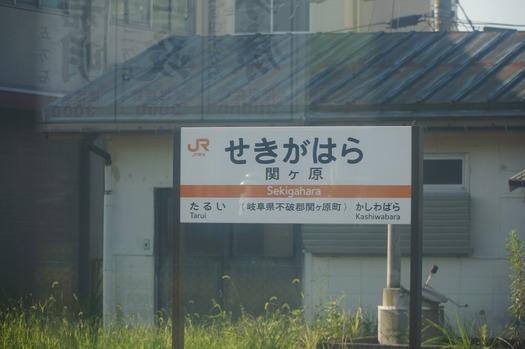 DSC06694.jpg